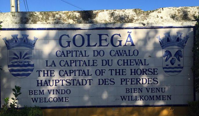Golega, pur sang lusitanien, élevage