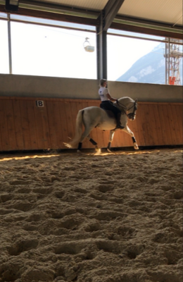 chevaux lusitaniens dressage