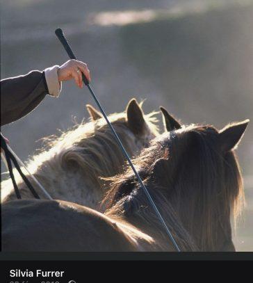 228-equitation-ethologique